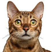 Cat Sounds & Cat Meows app analytics