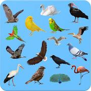 Birds - Learning Birds