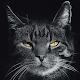 Wallpaper Hitam Keren Download for PC Windows 10/8/7