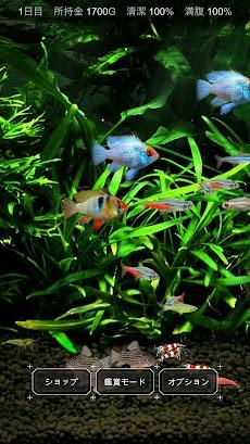 熱帯魚育成「ミニアクア」癒しのアクアリウム体験のおすすめ画像1