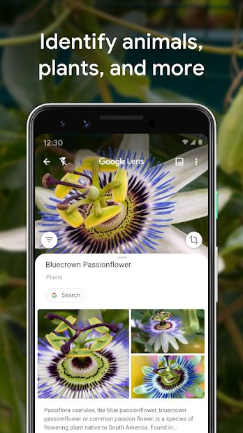 Google Lens screenshot 2