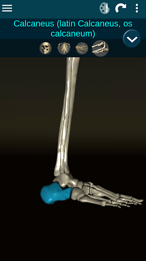 Osseous System in 3D (Anatomy) 2.0.3 Screenshots 7