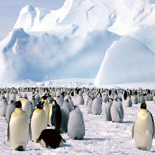 Penguins Jigsaw Puzzles apkdebit screenshots 15