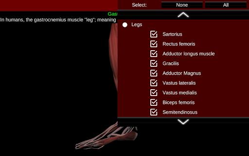 Muscular System 3D (anatomy) 2.0.8 Screenshots 13