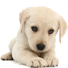 puppies wallpapers FHD 4K 2021 .APK