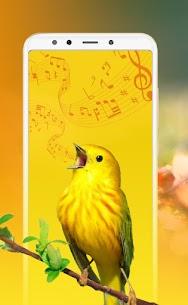 Best Bird Sounds, Calls & Ringtones 3
