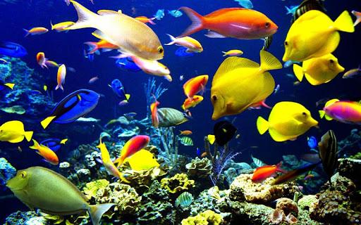 Underwater Jigsaw Puzzles  screenshots 4