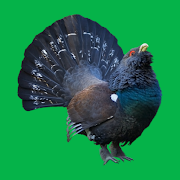 Progressive decoy on forest and mountain bird