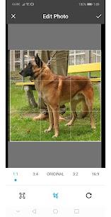 Dogs Pedia – Dog Breeds Identifier 5