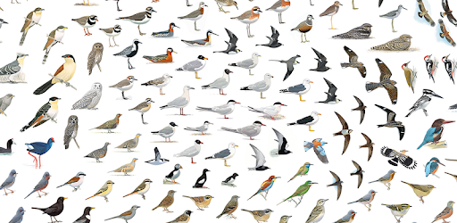 Collins Bird Guide APK 0