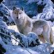 Wolf Wallpaper Best HD