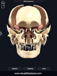 Skull Anatomy Pro.