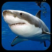 Sharks. Video Wallpaper