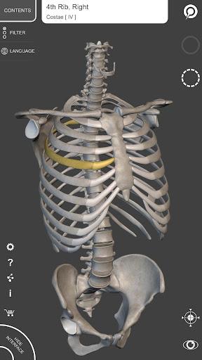Skeleton   3D Anatomy 2.5.3 Screenshots 1