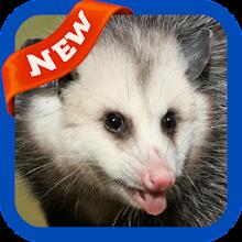 Possum Wallpaper icon