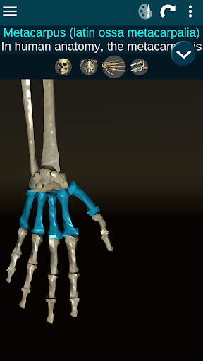 Osseous System in 3D (Anatomy) 2.0.3 Screenshots 4