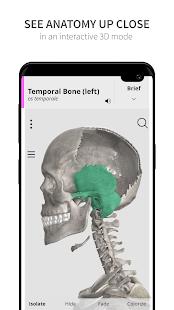 Anatomyka Skeleton