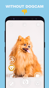 DogCam – Dog Selfie Filters and Camera 3