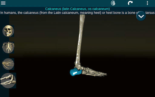 Osseous System in 3D (Anatomy) 2.0.3 Screenshots 13