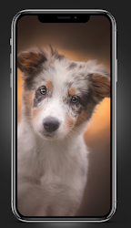 puppies wallpapers FHD 4K 2021 .APK Preview 7