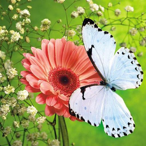 Butterflies Jigsaw Puzzles screenshots 3