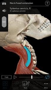 Muscle Premium – Human Anatomy, Kinesiology, Bones Apk 5