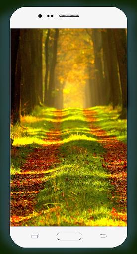 Forest Wallpaper HD Screenshots 6