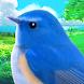 鳥マスター! - Androidアプリ