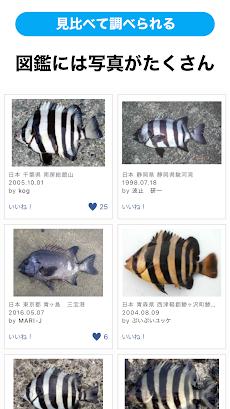 魚みっけのおすすめ画像5