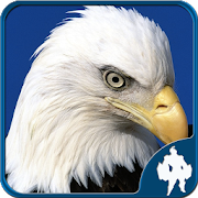Birds Jigsaw Puzzles Game