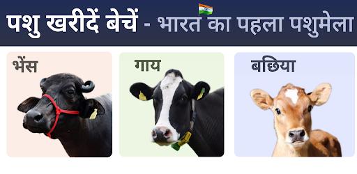 गाय भैंस wala पशुमेला - Animall app – Apps on Google Play