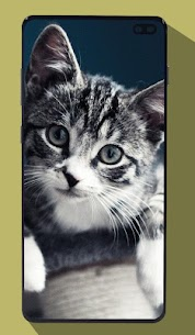 Kitten Wallpapers 2