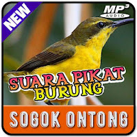 Suara Pikat Burung Sogok Ontong Mp3 Offline Download Apk Free For Android Apktume Com