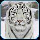 Snow Tiger Live Wallpaper Download on Windows