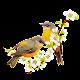 Bird Soundboard Download for PC