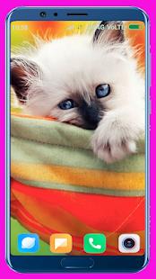 Cute Kitten Wallpaper Best 4K