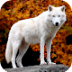 Wolf Wallpaper HD Download on Windows