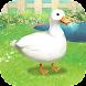 アヒル育成ゲーム (コールダック育成) - Androidアプリ