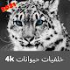 خلفيات حيوانات جملية Beautiful animal wallpapers per PC Windows