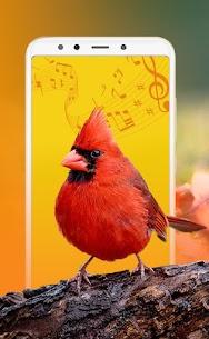 Best Bird Sounds, Calls & Ringtones 1
