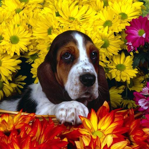 Dogs Jigsaw Puzzles apkdebit screenshots 5