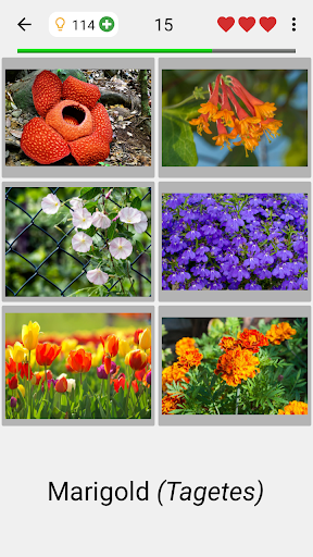 Flowers - Botanical Quiz about Beautiful Plants 3.1.0 screenshots 12