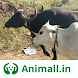 गाय भैंस wala पशुमेला - Animall app
