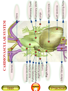 ANATOMY 3D – Human, Animal, Plant, Insect Anatomy For Android 1