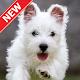 Wallpaper Anjing Lucu Download for PC Windows 10/8/7