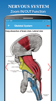 Nervous System Anatomy - Human Anatomy
