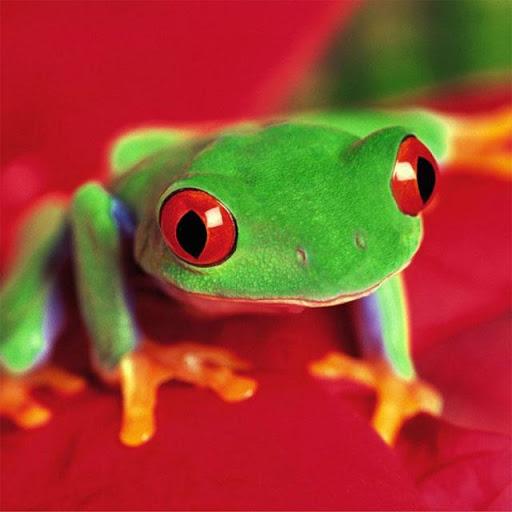 Frogs Jigsaw Puzzles  screenshots 5