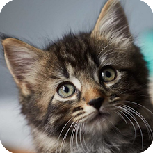 Cat Knowledge Download on Windows