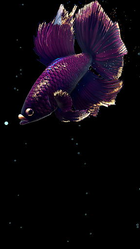 Betta Fish Live Wallpaper FREE 1.4 Screenshots 12