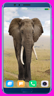 Elephant Wallpaper Best 4K